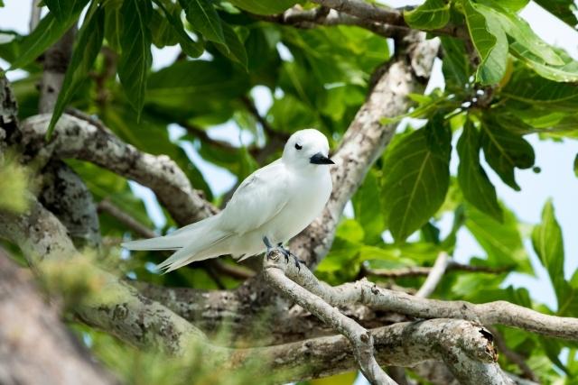 Vögel auf der Coco Island