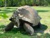 img15-giant-tortoise