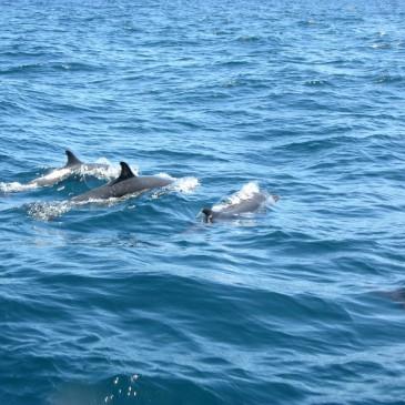La Reunion und Mayotte – Reiseangebot für September 2013 Wandern und Wale beobachten