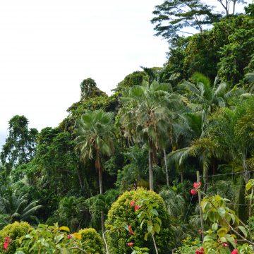 Ausflugstipp Praslin: Paradiesischer Nationalpark Fond Ferdinand auf den Seychellen