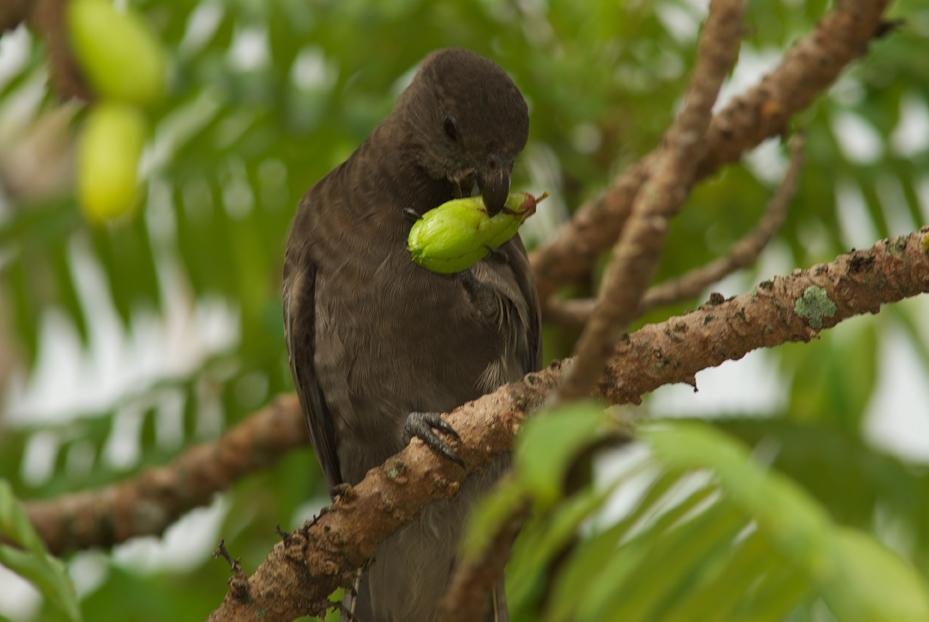 IMG26 Black Parrot