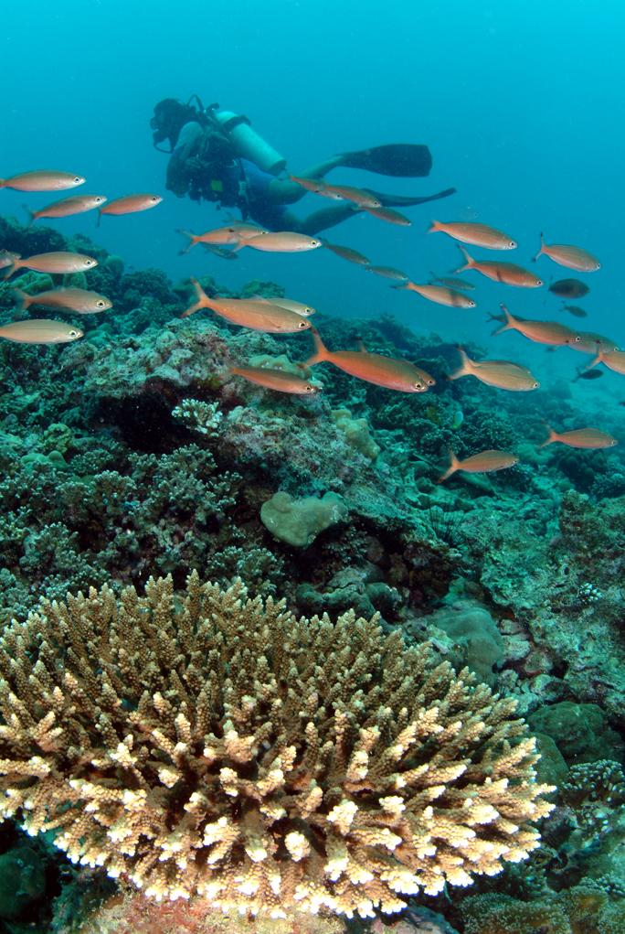 IMG6 Coral & Fish