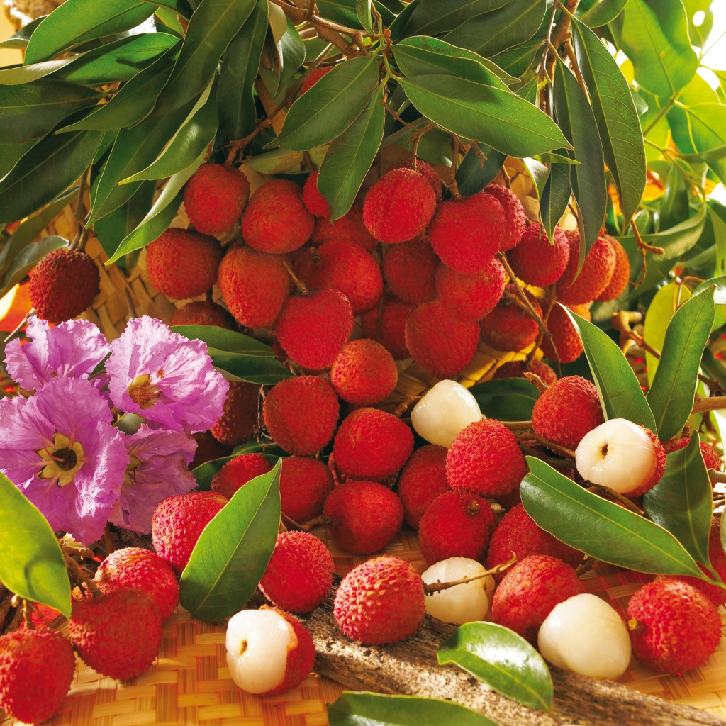 Fruits Letchis