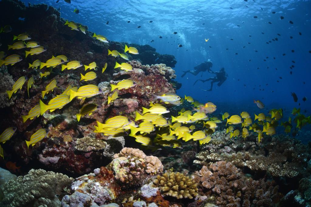 Unterwasserwelt Silhouette