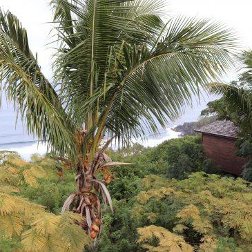 Insel La Reunion Rundreise 10 Tage Empfehlung und Tipps