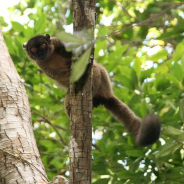 Mayotte Le Jardin Maore aktuelle Fotos Bilder und Informationen Tauchen, Entdecken und Erleben